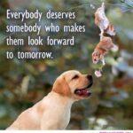 Animal Life Quotes Tumblr