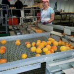 Benefits of Using Conveyor Systems in Different Industries