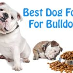 Best Quality Dog Foods: What To Look For In A Good Dog Food?