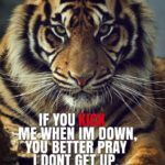 Best Tiger Quotes Facebook