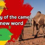 Camel Instagram Captions