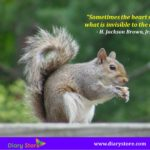 Caption For Squirrel Photo Twitter