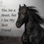 Captions For Horse Pictures Facebook