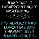Cute Hump Day Quotes Twitter