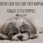 Cute Puppy Captions Twitter
