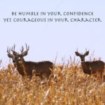 Deer Quotes And Sayings Twitter