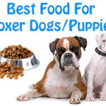 Dog Food Protein – Choosing What's Right For Your Dog