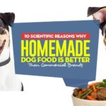 Dog Food: Understanding Commercial Dog Food