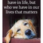 Dogs Are Life Quotes Tumblr