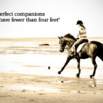Equestrian Sayings