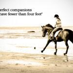 Equestrian Sayings