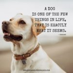 Good Dog Quotes Tumblr