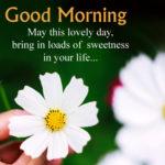 Good Morning Wishes 2020 Pinterest