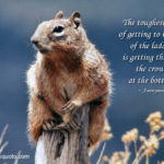 Inspirational Squirrel Quotes Pinterest