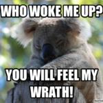Koala Quotes Sayings Facebook