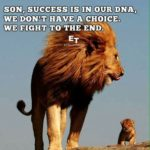 Lion Fight Quotes Facebook