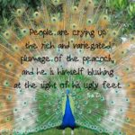 Peacock Beauty Quotes Facebook