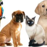 Puppies for Sale – Buy & Sell Pets Online