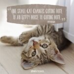 Quotes About Cats And Love