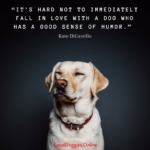 Quotes About Dogs And Happiness Tumblr
