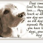 Quotes For A Dead Dog Pinterest