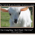 Quotes On Goats Tumblr