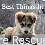 Rescue Dog Sayings Facebook