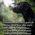 Sentimental Dog Quotes Pinterest