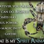 Spider Captions Pinterest