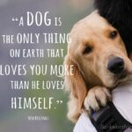 Unconditional Love Of A Dog Quotes