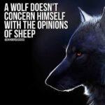 Wolf Captions Facebook