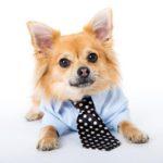 Puppy: Find A Shih Tzu Puppy For Sale